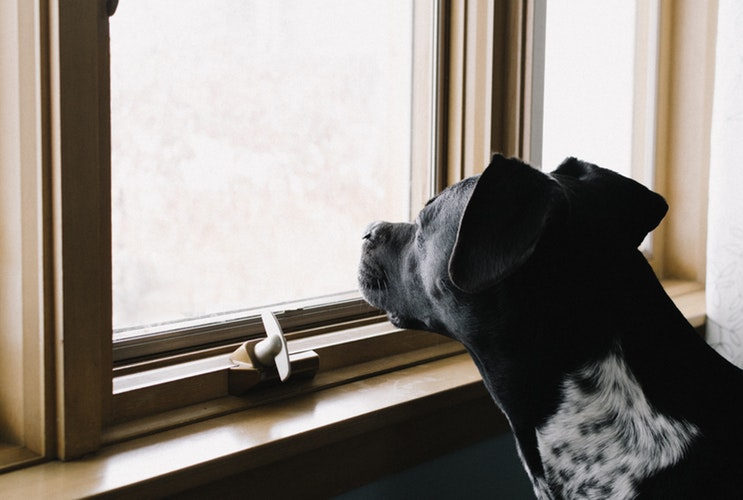 Signs that your dog is very lonely