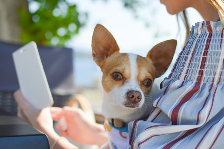 Mobile phone games designed for Dogs