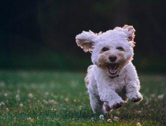 Popular Puppy Names 2019